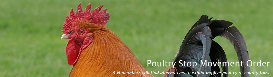 Poultry Stop Movement Order