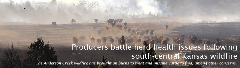 Producers battle herd health issues following south-central Kansas wildfire