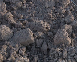 The international year of soils soils protect the natural for Natural resources soil information