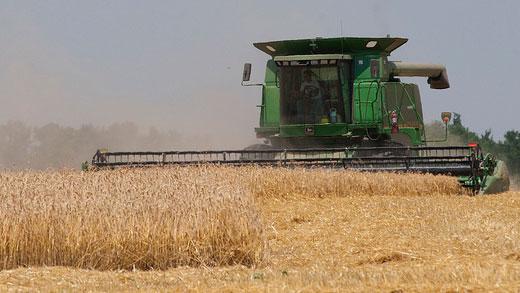 combine in Kansas wheat field