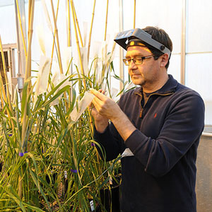 Eduard Akhunov, professor of plant pathology and wheat genomics, Kansas State University