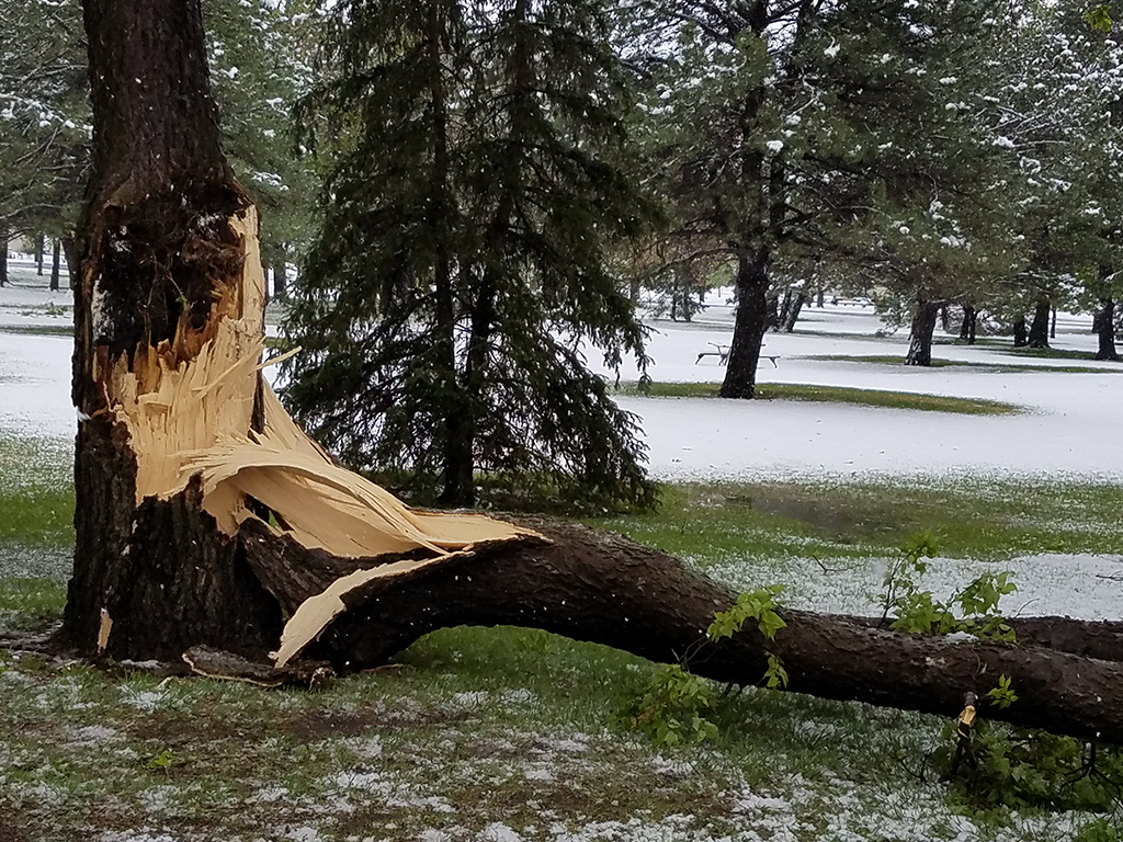 When Severe Weather Strikes Be Mindful Of Tree Damage