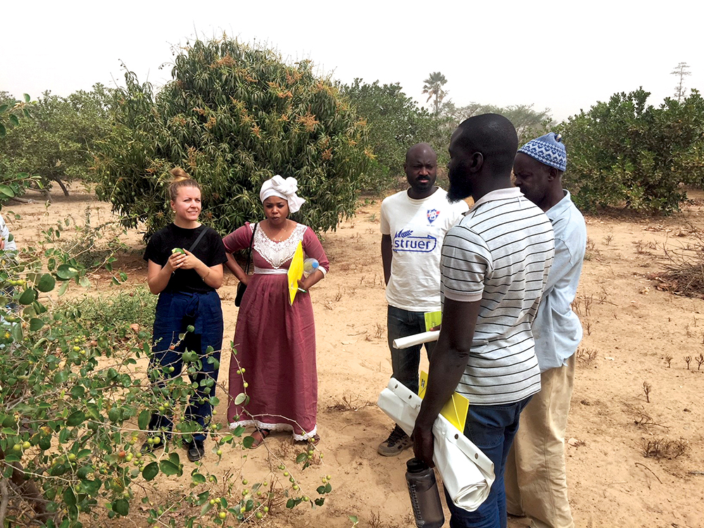 Peace Corps volunteers and training team members in the field in Senegal