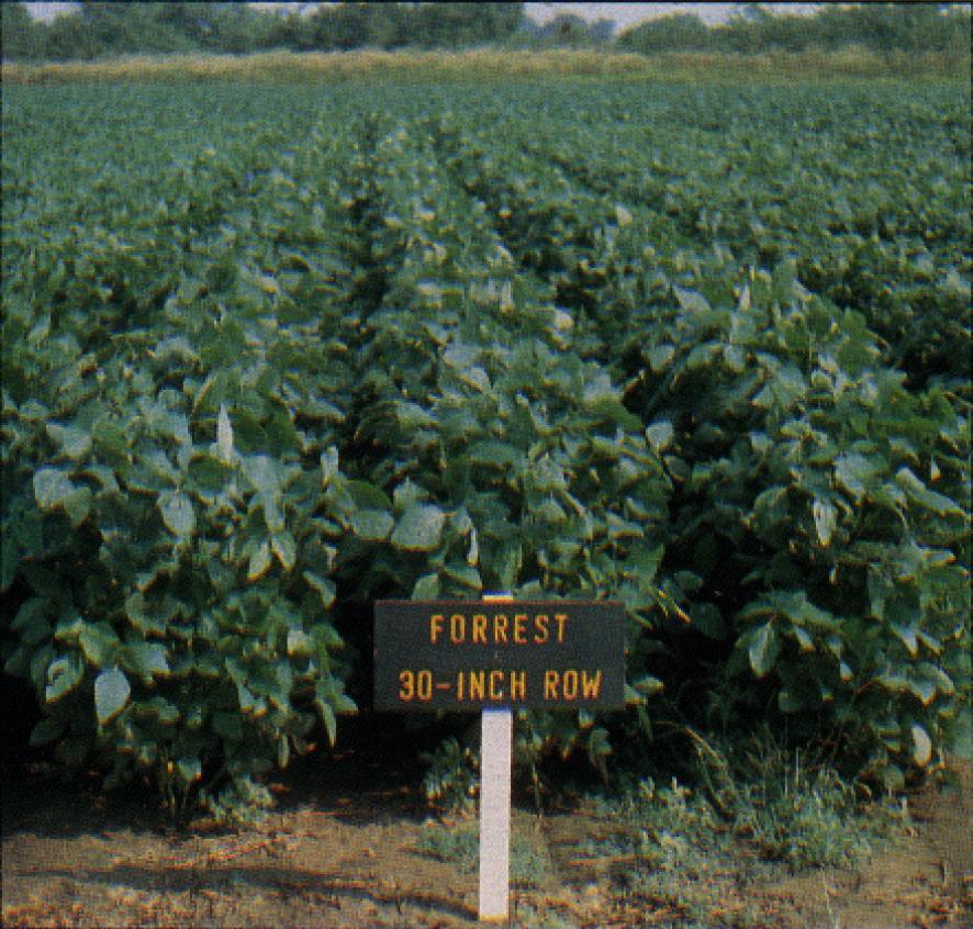 KAES Soybean Field 1985