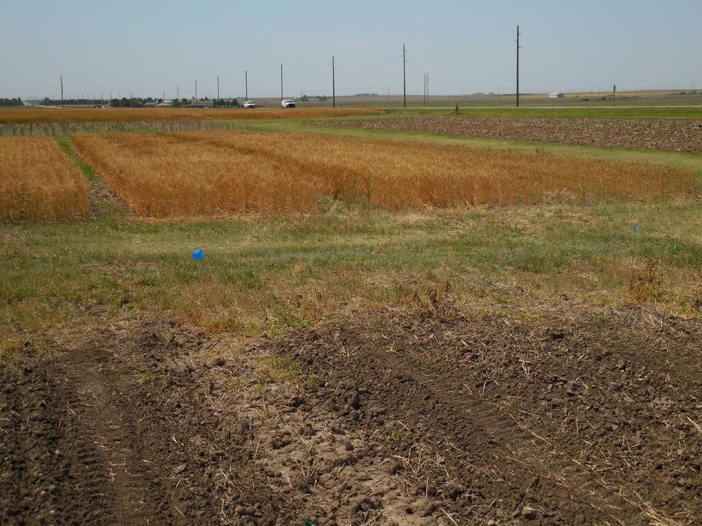 KSRE research plots Hays