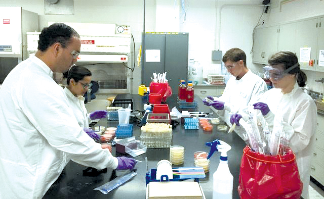 From left, Daniel Vega, Ph.D. student in Food Science; Keyla Lopez-Campabadal, Ph.D. student in Food Science; Robert Sholl, undergraduate student in Food Science; and Jennifer Acuff, graduate student in Food Science, work in a K-State lab.