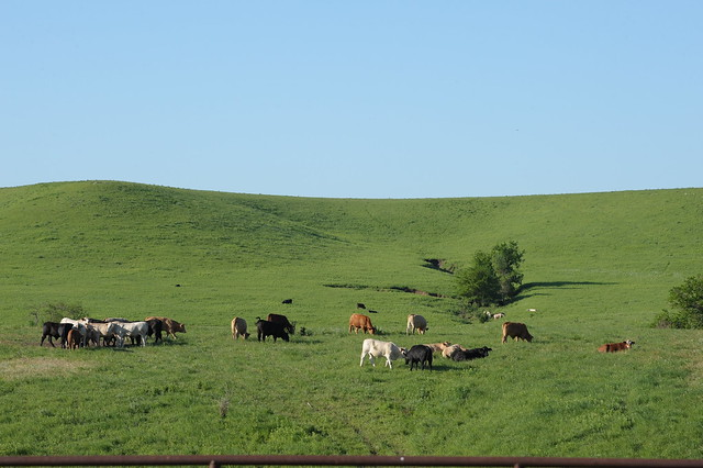 Great Plains Grazing is hosting a webinar July 23 on the new Nutrient Tracking Tool