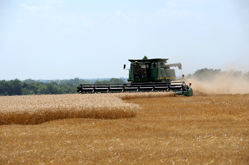 A combine makes its way through a wheat field