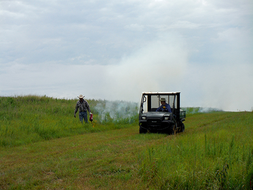 Adjusted pasture burning schedule could reduce weeds