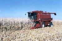 Harvesting 300 bu/acre field corn grown using SDI in 1998